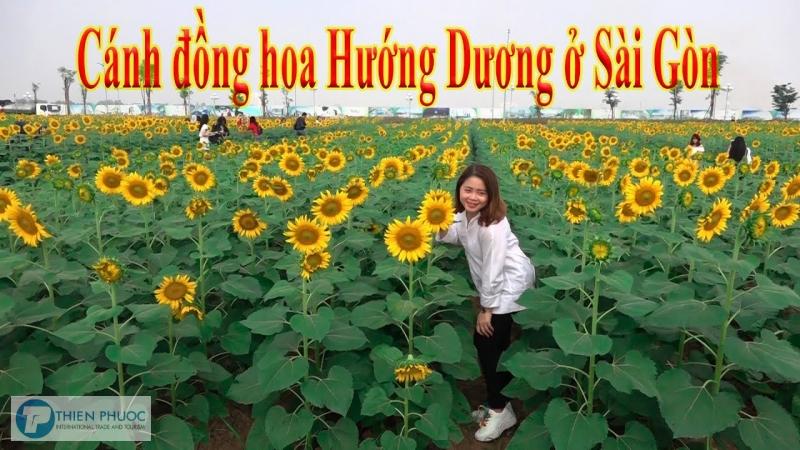 Cánh đồng Hoa Hướng Dương – địa điểm check – in mới tại Sài Gòn